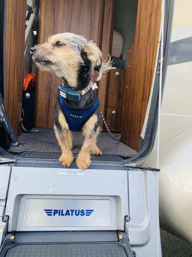 Private flight with pets