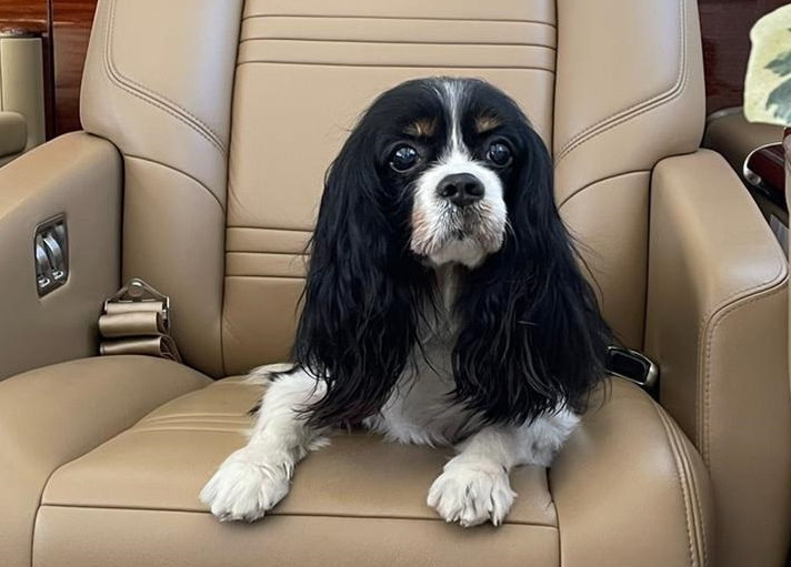 Private Jet Lugano Airport AirDynamic Dog Doggy