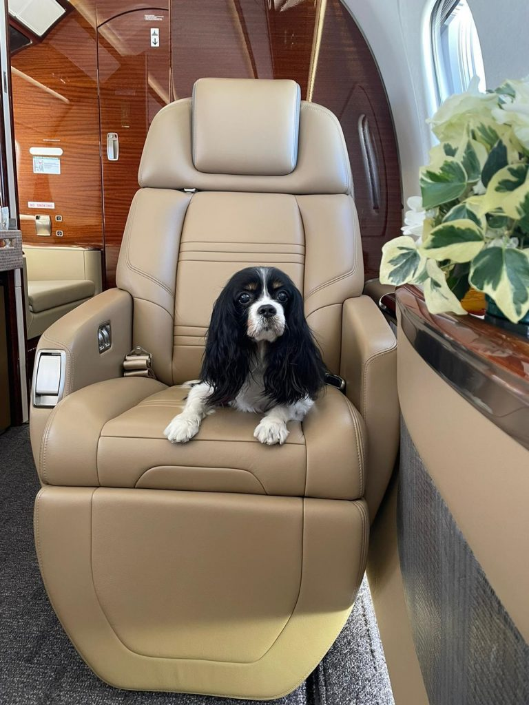 toby appquality private jet dog
